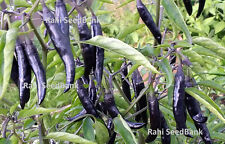 Thai Black Dragon Chilli - Hot & Spicy Chilli Comes with Huge Producing Ability!