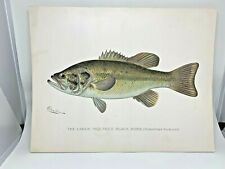 Original Antique Denton Fish Print Largemouth Bass