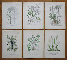 Artus Botany 6 Handcolored Prints Valerian Juniper Ground Pines * - 1848