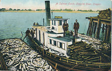 """1911 """"A Salmon Catch, Coquille River, Oregon"""" Trawler, Fish, Dock Tinted Postcar"""