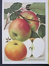 Large decorative Chromo Lithograph of Apples,Deutschlands Obstsorten,ca.1900