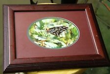 Photo 5 x 7 framed Photography Fine Art Print Signed back of print Butterfly