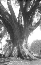 Marietta Ohio Rathe Bone Elm Real Photo Antique Postcard J51132