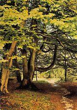 BT4398 Forest tree arbres