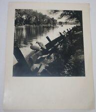 1930s Vintage Photo DORNEY LAKE PA Original DORNEY PARK Ducks Rowboat Allentown