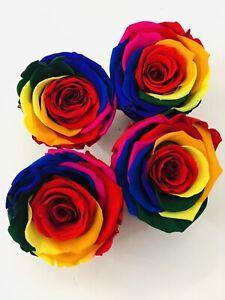 Preserved Eternal Forever Rainbow Individual Single Rose Flower Gift