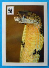 FIGURINA COOP WWF IL GIRO DEL MONDO - N.37 - COBRA REALE