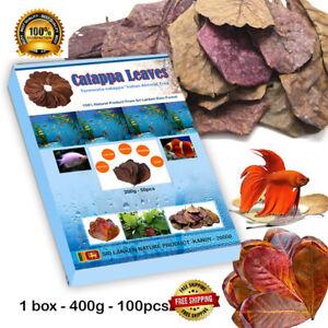 50 Catappa Leaves Almond Tree Aquarium Clean Tool Terminalia