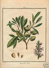 1768 Duhamel du Monceau Traité des Arbres HC engraving almond Amandier Nain