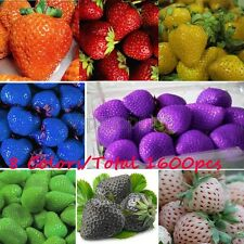 8 Color-1600pcs Sweet Strawberry Seeds Plant Everbearing Vegetable Fruit Seed