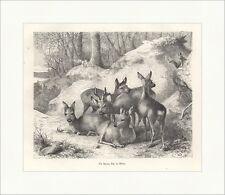 Ein Sprung Rehe im Winter Reh Rehbock Eichhörnchen Holzstich JAGD ALBUM 025