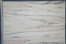 Tonewood Spalted Maple 18114 Bastelholz Ahorn Aufleimer Guitar Tonholz Blank