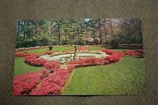 Vintage Postcard Azaleas Green Forest, Spring Has Sprung, East Texas