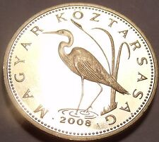 Rare Proof Hungary 2008-BP 5 Forint~Only 4,000 Minted~Great White Egrat~Free Shi