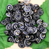 30pcs Natural Beautiful top rare real sea Shell Conch aquarium YBK232