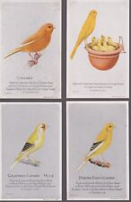 1926 CAPERN CAGE BIRDS POSTCARD SIZE CARDS - PICK THE CARDS YOU NEED