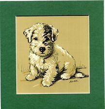 Lucy Dawson ~ Sealyham Terrier ~ Colour Print Genuine Vintage 1936