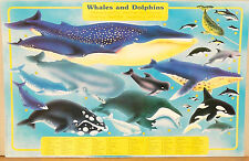 (PRL) 1990 WHALES DOLPHINS BALENA DELFINI WALE VINTAGE AFFICHE ART PRINT POSTER