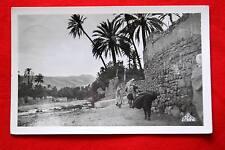 ALGERIE BOU SAADA DANS L'OUED AFRIQUE 1953 EPA N°16
