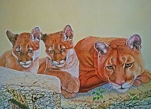 Mountain lion and cubs print by Jack Turbyville