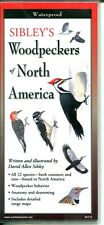 Sibley's Woodpeckers of North America Laminated Folding Pocket Guide (New)