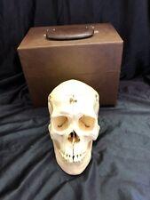 Kilgore International Dissected Model Skull with Care Lifesize Anatomical Model