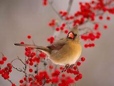 Female Cardinal~counted cross stitch pattern #2155~Animals Birds Nature Chart