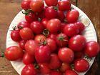 Heirloom GERMAN LUNCHBOX TOMATOES Organically Grown Seed, 20 Seeds