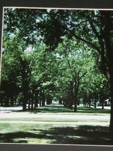 Many Green Trees by B Edwards Original Photographic Art Mounted on Card 25x19.75