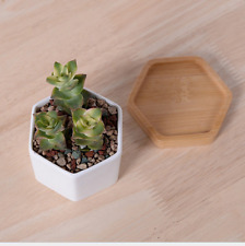 New Ceramic Modern Hexagon Succulent Small Plant/Flower Pot&Bamboo Tray Balcony