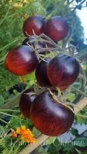 10 graines de tomate bio DAMASCUS STEEL unique une très belle découverte