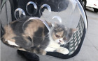 Alternative to pet Kennel and Dog Carrier Purse Top Loaded Pet Carrier for Cats