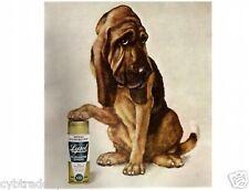 Bloodhound Lysol  Refrigerator  Magnet.....Funny!