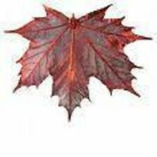 GENUINE  MAPLE LEAF ORNAMENT ~ COPPER ~ ELECTROPLATED ~ NEW!!!
