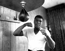 "MUHAMMAD ALI LEGENDARY BOXER ""THE GREATEST"" - 8X10 PUBLICITY PHOTO (ZY-145)"