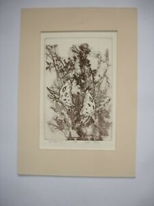 VINTAGE limited edition ETCHING of a BUTTERFLIES LOUISE TULLY 13/50