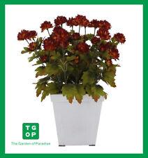 Ship Australia Wide Artificial Fake Flower Plant Chrysanthemum Dark Orange