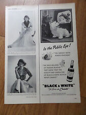 1951 Black White Scottish Scotty Terrier Westie Ad In the Public Eye TV Tube