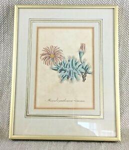 1814 Antique Framed Print Botanical Hand Coloured Engraving Original Curtis