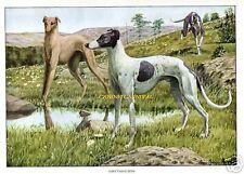 VINTAGE ANTIQUE  GREYHOUND DOGS DOG 1919 RARE Art Print