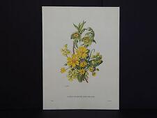 Botanicals, Flowers, Ariel Press, c.1950 P.J. Redoute #05