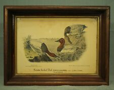 vintage old  Audubon Canvas backed Duck Print wood glass picture frame 1938 app