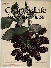 Rare Orig VTG 1904 Blackberries Country Life In America Mag Cover Only Art Print