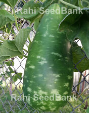 Bottle Gourd Monsoon - One of the Most Tasty, Prolific & Vigorous Grower!!!