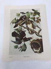 John James Audubon Folio Plate 388 Wood Duck Limited 750