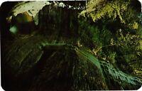 Vintage Postcard - 1956 Bridal Veil Falls Watkins Glen State Park #4095