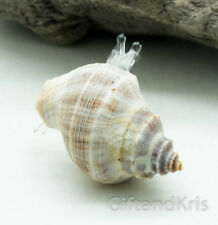 Figurine Animal Hand Blown Glass Hermit Crab Fish - Gnhm030