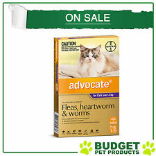 Advocate For Large Cats Over 4kg 6 pack