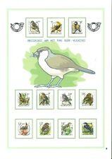 Lot Oiseaux Buzin !