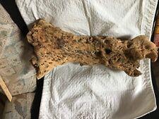 New listing Cholla Cactus Wood Piece Aquarium Reptile Bird Crab Pet X-Large